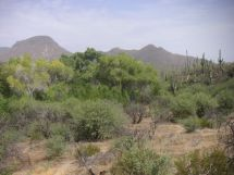 Jewel of the Creek where the Oak meets the Saguaro