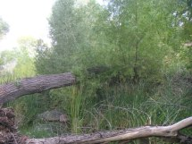 Cave Creek system creek