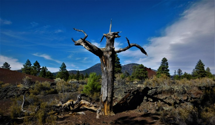 Flagstaff Lava Field Travel Scout