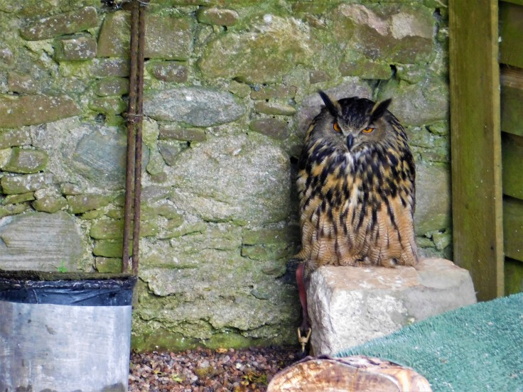 Owls at Dunrobin Castle