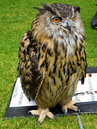 Owl at Dunrobin Castle