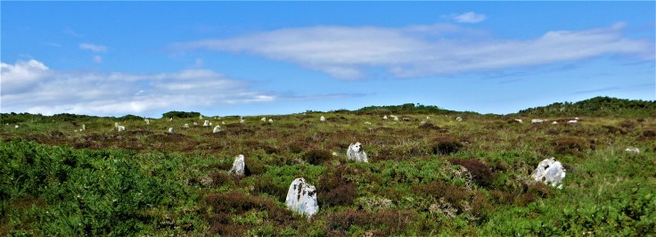 Hill o' Many Stanes Travel Scout