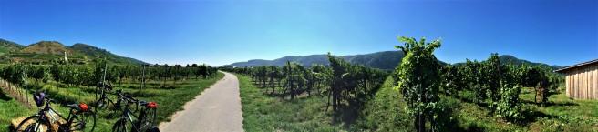 Wachau Valley Wine 2.JPG